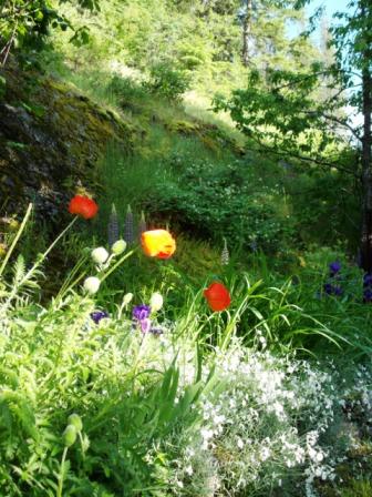 Poppy Hillside - Castlegar