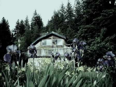 Irises - Castlegar