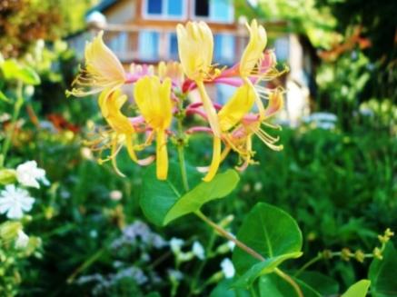 Alien Flower - Castlegar